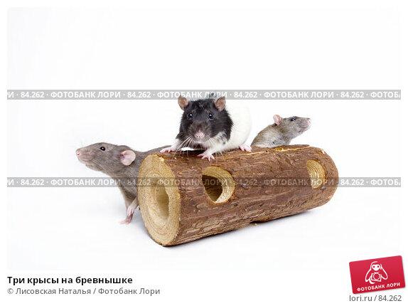 Три крысы на бревнышке, фото № 84262, снято 15 сентября 2007 г. (c) Лисовская Наталья / Фотобанк Лори