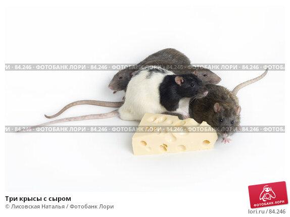 Три крысы с сыром, фото № 84246, снято 15 сентября 2007 г. (c) Лисовская Наталья / Фотобанк Лори
