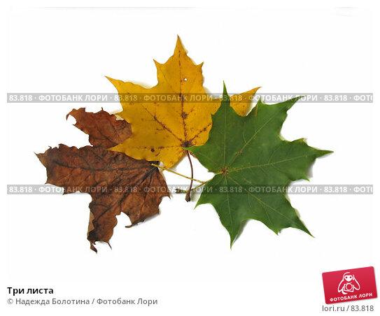 Три листа, фото № 83818, снято 7 октября 2006 г. (c) Надежда Болотина / Фотобанк Лори