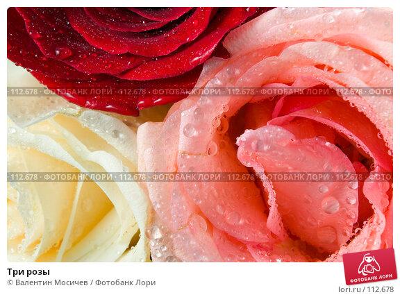 Купить «Три розы», фото № 112678, снято 10 февраля 2007 г. (c) Валентин Мосичев / Фотобанк Лори