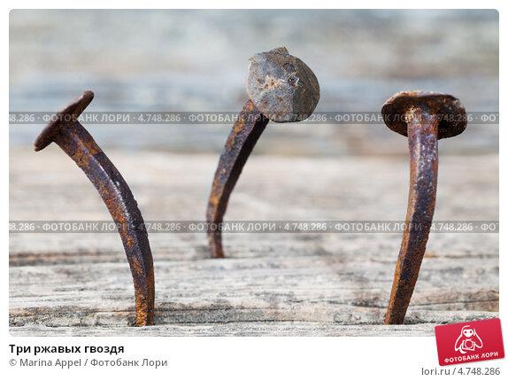 Купить «Три ржавых гвоздя», фото № 4748286, снято 24 мая 2019 г. (c) Marina Appel / Фотобанк Лори