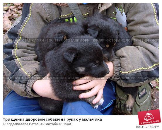 Купить «Три щенка дворовой собаки на руках у мальчика», фото № 159498, снято 20 октября 2007 г. (c) Кардаполова Наталья / Фотобанк Лори
