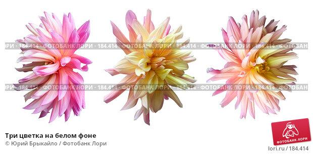 Три цветка на белом фоне, фото № 184414, снято 6 октября 2007 г. (c) Юрий Брыкайло / Фотобанк Лори