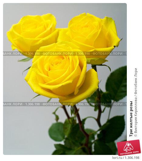 Шиншиллы Три желтых розы