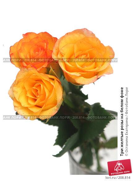 Три желтые розы на белом фоне, фото № 208814, снято 4 августа 2007 г. (c) Останина Екатерина / Фотобанк Лори