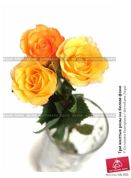 Купить «Три желтых розы на белом фоне», фото № 68950, снято 4 августа 2007 г. (c) Останина Екатерина / Фотобанк Лори