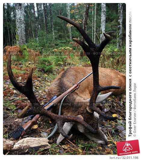 Купить «Трофей благородного оленя  с охотничьим карабином после охоты в Калининградской области», фото № 32011198, снято 24 октября 2008 г. (c) Олег Елагин / Фотобанк Лори
