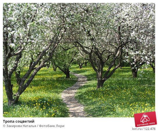 Купить «Тропа соцветий», фото № 122478, снято 18 мая 2007 г. (c) Закирова Наталья / Фотобанк Лори
