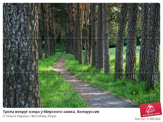 Тропа вокруг озера у Мирского замка, Белоруссия (2011 год). Стоковое фото, фотограф Ольга Ларина / Фотобанк Лори
