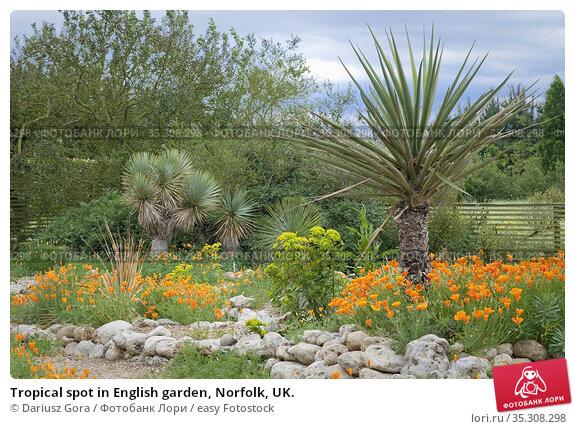 Tropical spot in English garden, Norfolk, UK. Стоковое фото, фотограф Dariusz Gora / easy Fotostock / Фотобанк Лори