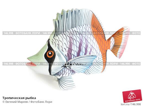Тропическая рыбка, фото № 146998, снято 10 декабря 2007 г. (c) Евгений Мареев / Фотобанк Лори