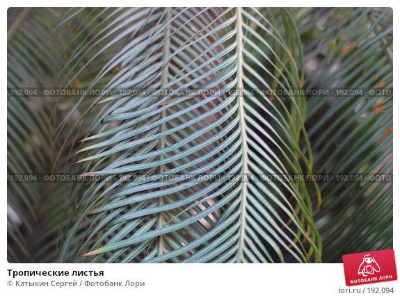 Тропические листья, фото № 192094, снято 5 января 2008 г. (c) Катыкин Сергей / Фотобанк Лори