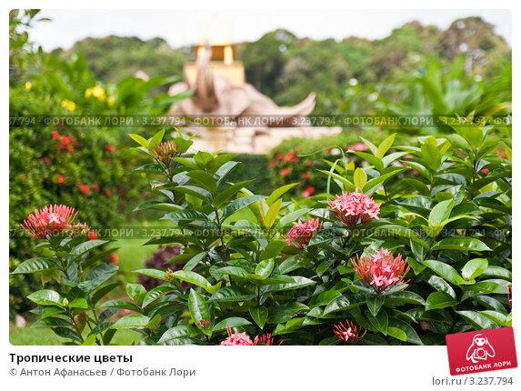 Тропические цветы купить — photo 1
