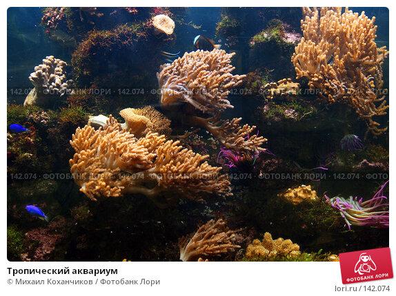 Тропический аквариум, фото № 142074, снято 12 ноября 2007 г. (c) Михаил Коханчиков / Фотобанк Лори