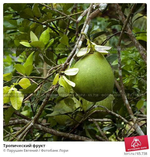 Тропический фрукт, фото № 65738, снято 30 мая 2017 г. (c) Парушин Евгений / Фотобанк Лори