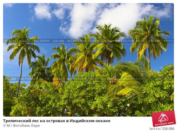 Тропический лес на островах в Индийском океане, фото № 328086, снято 27 апреля 2017 г. (c) Михаил / Фотобанк Лори
