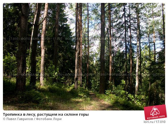 Тропинка в лесу, растущем на склоне горы, фото № 17010, снято 21 июля 2006 г. (c) Павел Гаврилов / Фотобанк Лори