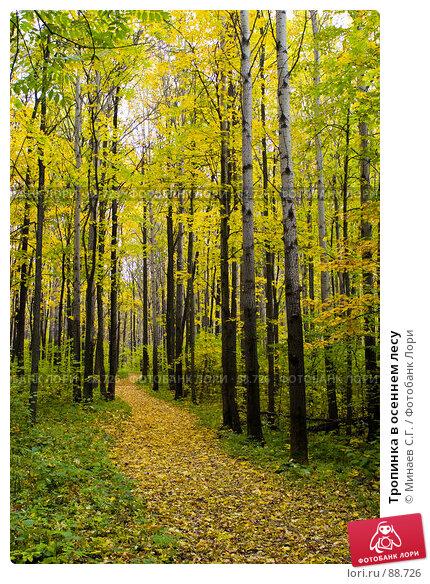 Тропинка в осеннем лесу, фото № 88726, снято 30 сентября 2006 г. (c) Минаев С.Г. / Фотобанк Лори