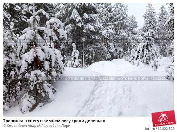 Купить «Тропинка в снегу в зимнем лесу среди деревьев», фото № 12822502, снято 20 декабря 2014 г. (c) Кекяляйнен Андрей / Фотобанк Лори