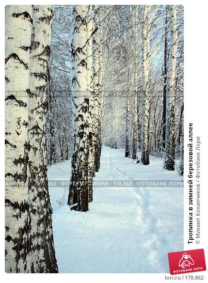 Тропинка в зимней березовой аллее, фото № 178862, снято 8 января 2008 г. (c) Михаил Коханчиков / Фотобанк Лори