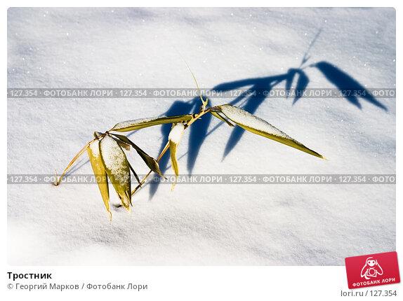 Тростник, фото № 127354, снято 27 февраля 2006 г. (c) Георгий Марков / Фотобанк Лори
