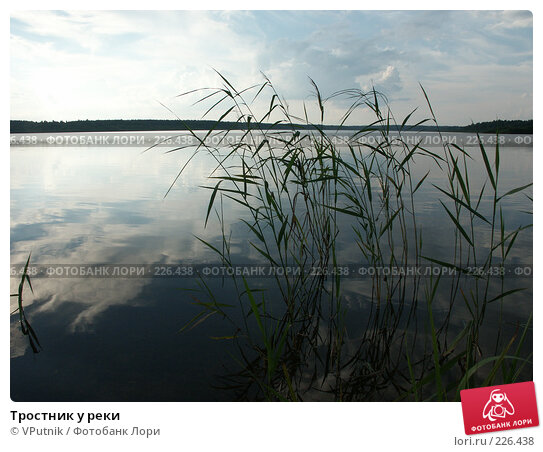 Тростник у реки, фото № 226438, снято 20 августа 2006 г. (c) VPutnik / Фотобанк Лори