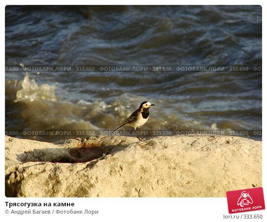 Трясогузка на камне, фото № 333650, снято 23 мая 2008 г. (c) Андрей Багаев / Фотобанк Лори