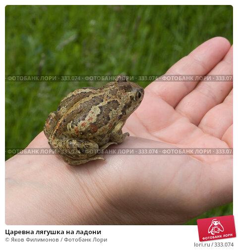 Царевна лягушка на ладони, фото № 333074, снято 22 июня 2008 г. (c) Яков Филимонов / Фотобанк Лори