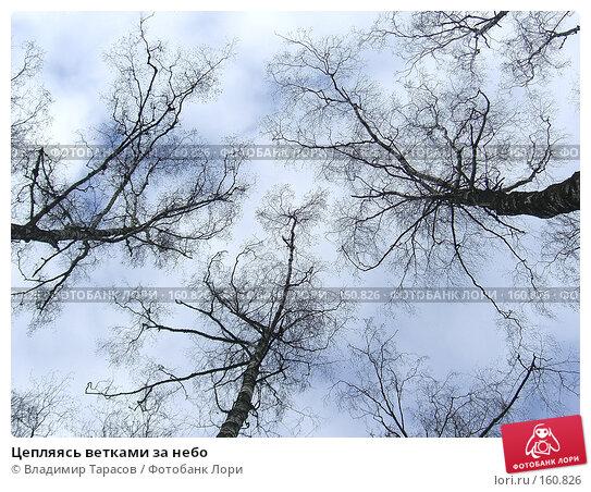 Цепляясь ветками за небо, фото № 160826, снято 6 апреля 2007 г. (c) Владимир Тарасов / Фотобанк Лори