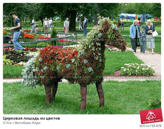 Купить «Цирковая лошадь из цветов», фото № 65878, снято 14 июля 2007 г. (c) Fro / Фотобанк Лори