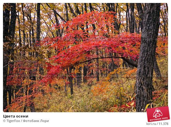Цвета осени, фото № 11378, снято 21 октября 2006 г. (c) TigerFox / Фотобанк Лори