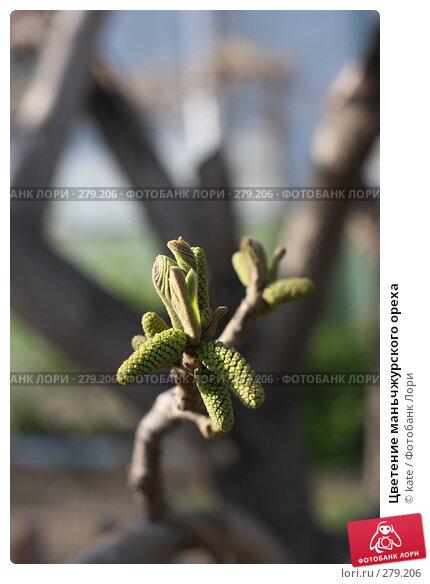 Цветение маньчжурского ореха, фото № 279206, снято 10 мая 2008 г. (c) Екатерина Цуканова / Фотобанк Лори