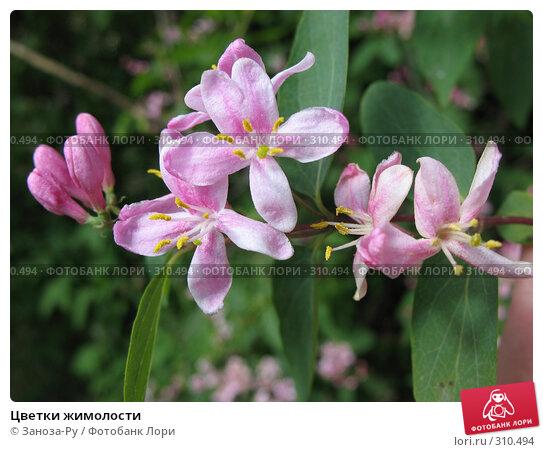 Цветки жимолости, фото № 310494, снято 31 мая 2008 г. (c) Заноза-Ру / Фотобанк Лори