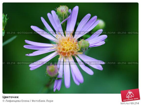 Цветочек, фото № 69214, снято 1 августа 2007 г. (c) Лифанцева Елена / Фотобанк Лори