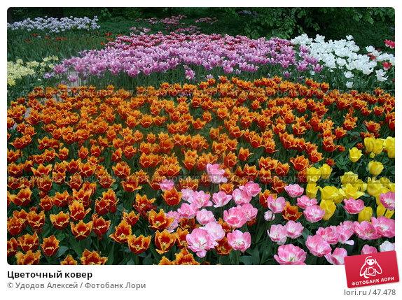 Купить «Цветочный ковер», фото № 47478, снято 22 мая 2007 г. (c) Удодов Алексей / Фотобанк Лори