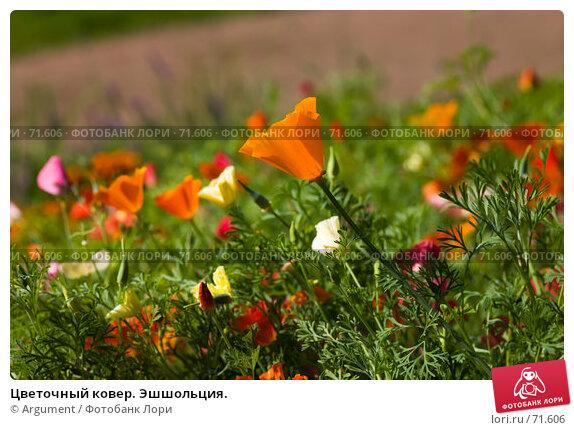 Цветочный ковер. Эшшольция., фото № 71606, снято 5 августа 2007 г. (c) Argument / Фотобанк Лори