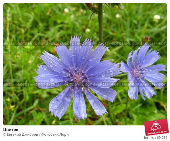 Купить «Цветок», фото № 69254, снято 27 июля 2007 г. (c) Евгений Джибров / Фотобанк Лори