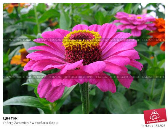 Цветок, фото № 134926, снято 23 августа 2004 г. (c) Serg Zastavkin / Фотобанк Лори