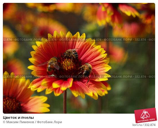 Цветок и пчелы, фото № 332874, снято 26 октября 2016 г. (c) Максим Пименов / Фотобанк Лори