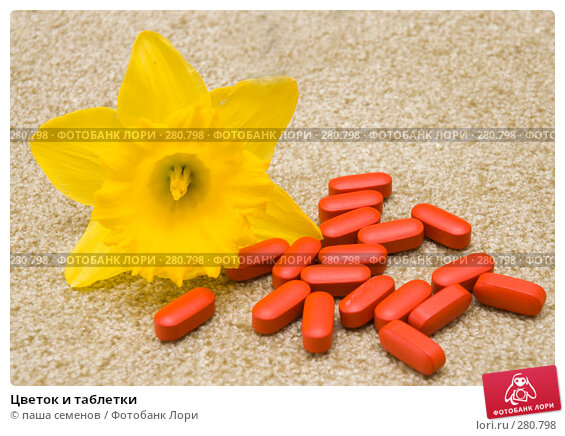 Цветок и таблетки, фото № 280798, снято 21 апреля 2008 г. (c) паша семенов / Фотобанк Лори