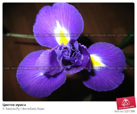 Цветок ириса, фото № 227398, снято 9 октября 2007 г. (c) Заноза-Ру / Фотобанк Лори