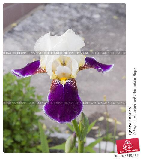 Купить «Цветок ириса», фото № 315134, снято 7 июня 2008 г. (c) Эдуард Межерицкий / Фотобанк Лори