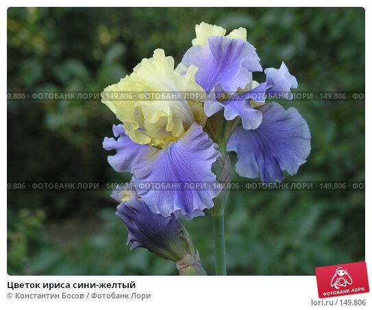 Цветок ириса сини-желтый, фото № 149806, снято 25 мая 2005 г. (c) Константин Босов / Фотобанк Лори