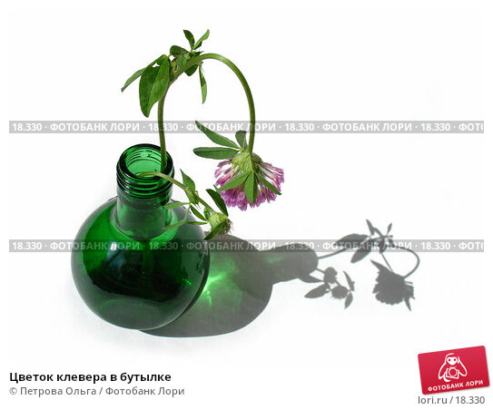 Купить «Цветок клевера в бутылке», фото № 18330, снято 14 сентября 2006 г. (c) Петрова Ольга / Фотобанк Лори