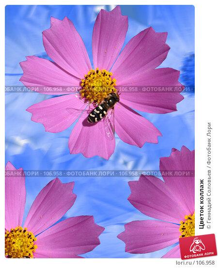 Цветок коллаж, фото № 106958, снято 29 августа 2007 г. (c) Геннадий Соловьев / Фотобанк Лори