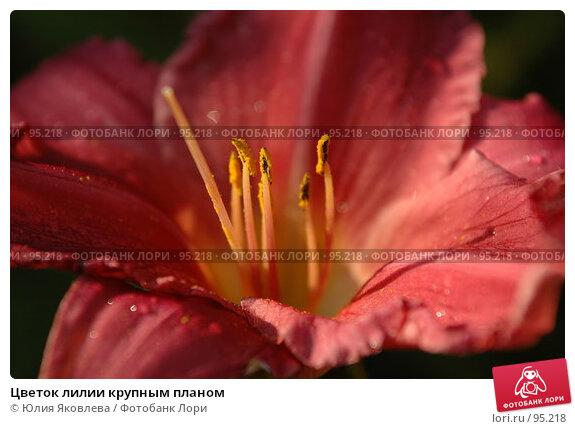 Цветок лилии крупным планом, фото № 95218, снято 24 августа 2006 г. (c) Юлия Яковлева / Фотобанк Лори