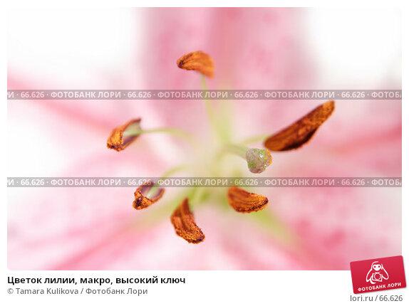 Цветок лилии, макро, высокий ключ, фото № 66626, снято 30 июля 2007 г. (c) Tamara Kulikova / Фотобанк Лори