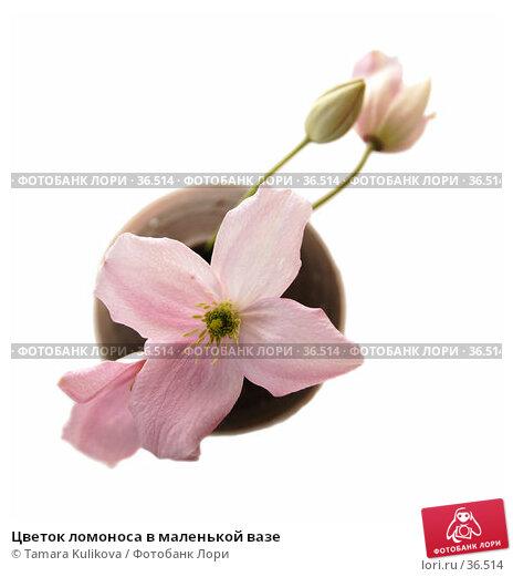 Купить «Цветок ломоноса в маленькой вазе», фото № 36514, снято 28 апреля 2007 г. (c) Tamara Kulikova / Фотобанк Лори