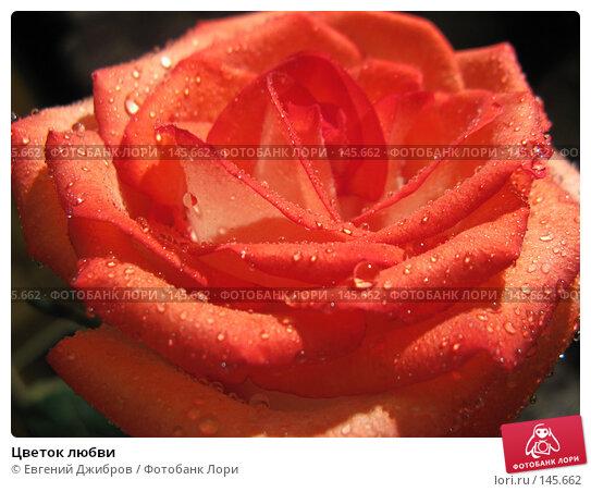 Цветок любви, фото № 145662, снято 27 ноября 2007 г. (c) Лысых Константин / Фотобанк Лори