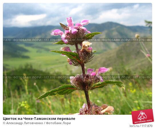 Цветок на Чеке-Таманском перевале, фото № 117870, снято 11 июля 2007 г. (c) Александр Литовченко / Фотобанк Лори